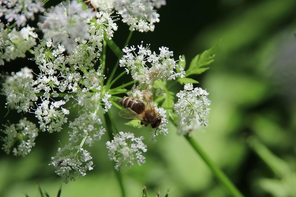 Macro, Flower, Bee, Nature, Garden, Spring, Floral