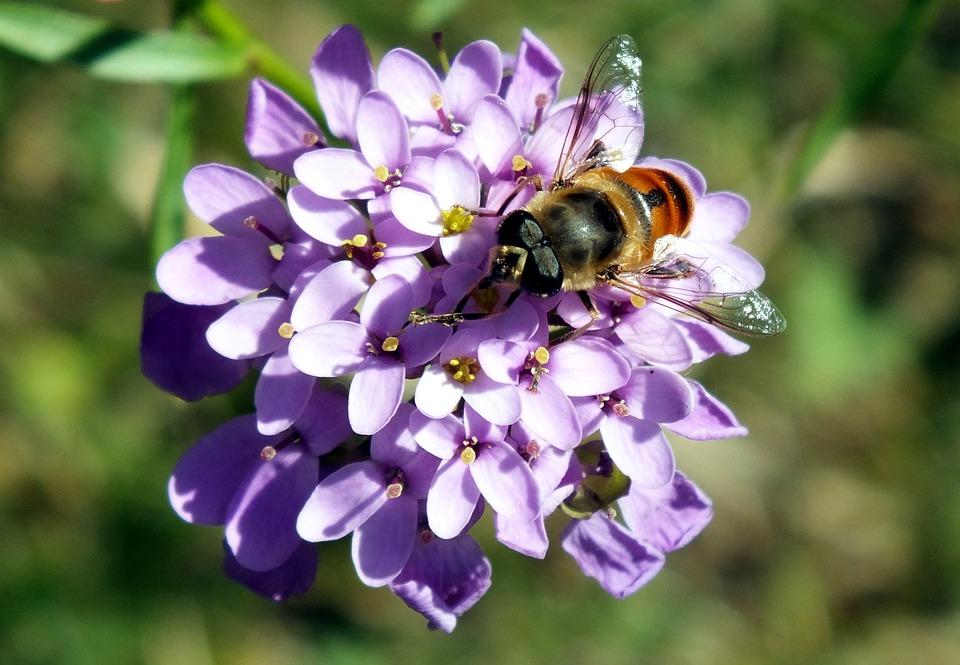 Nature, Flower, Plant, Summer, Garden, Bee