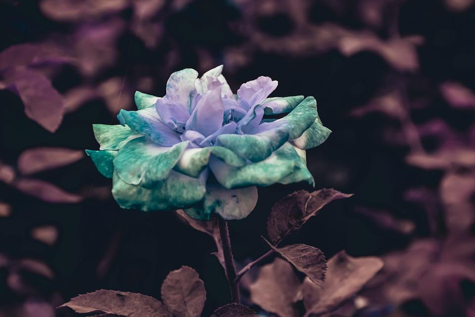 Nature, Closeup, Living, Garden, Biology, Colorful