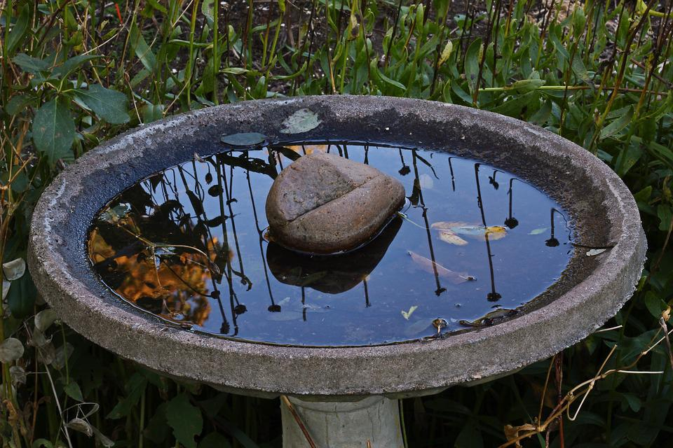 Bird Bath, Water, Nature, Garden, Drink, Wildlife