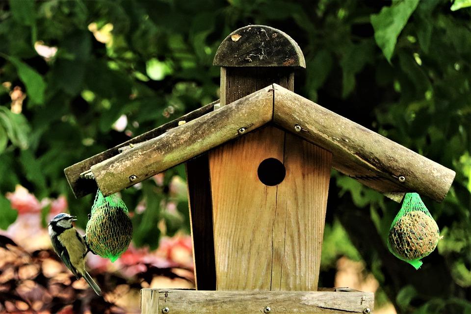 Bird, Bird-chucks, Bird Seed, Garden, Foraging