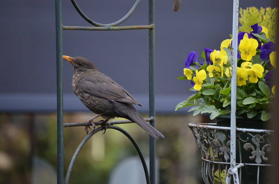 Nature, Garden, Birds, Outdoor