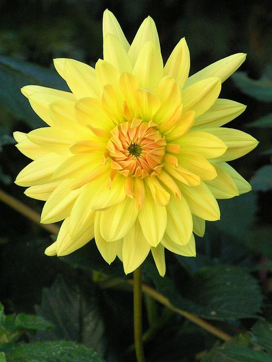 Flower, Garden, Nature, Plant, Summer, Blossom, Bloom