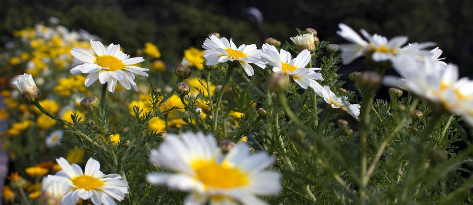 Flower, Nature, Beauty, Blossom, Spring, Garden, Bloom