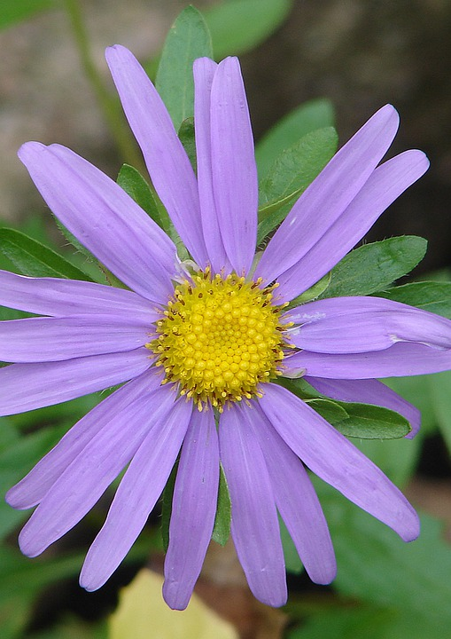 Blossom, Bloom, Garden, Plant, Flowers, Purple