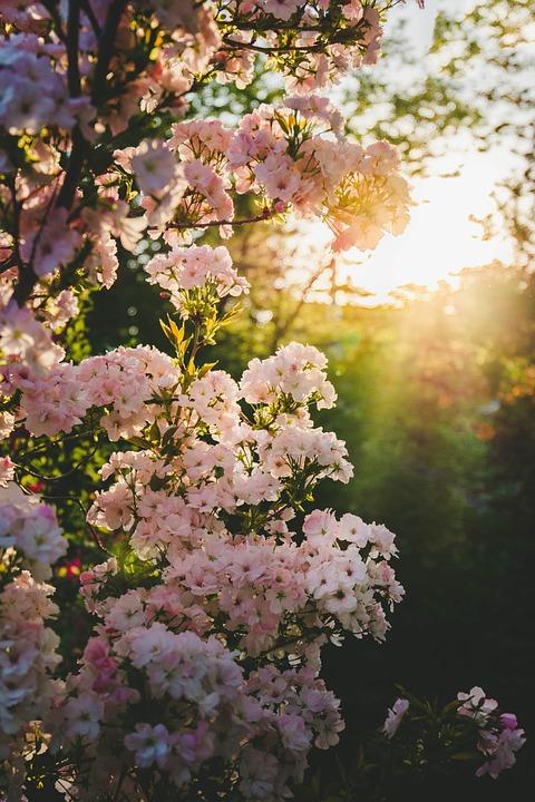 Blooming, Spring, Garden, Blossom, Flower, Nature