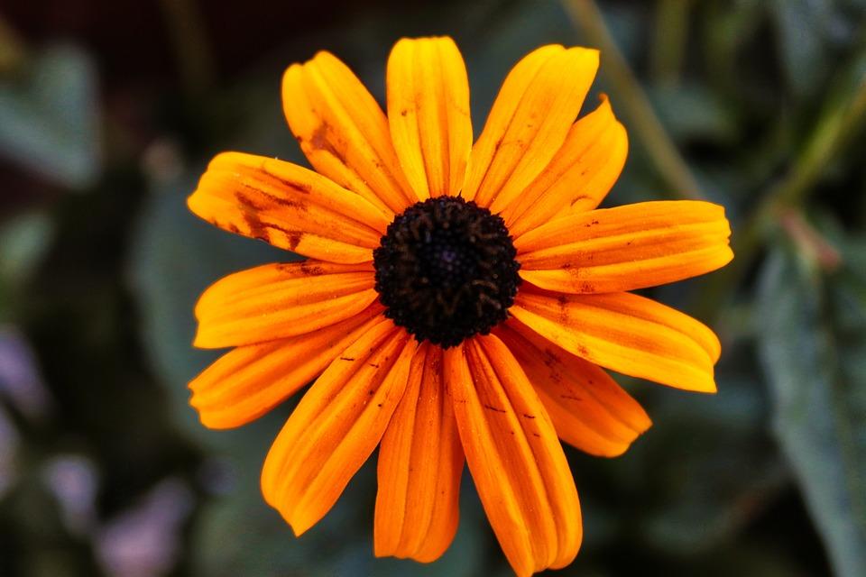 Flower, Yellow, Summer, Nature, Blossom, Bloom, Garden