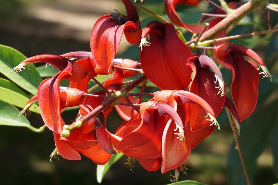 Flower, Flora, Red, Nature, Blossom, Bloom, Garden