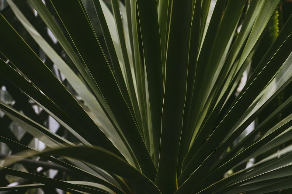 Botanical, Botany, Garden, Greenery, Natural, Nature
