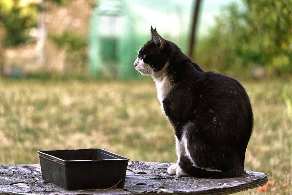 Cat, Garden, Domestic Animal, Feline, Cat Eyes