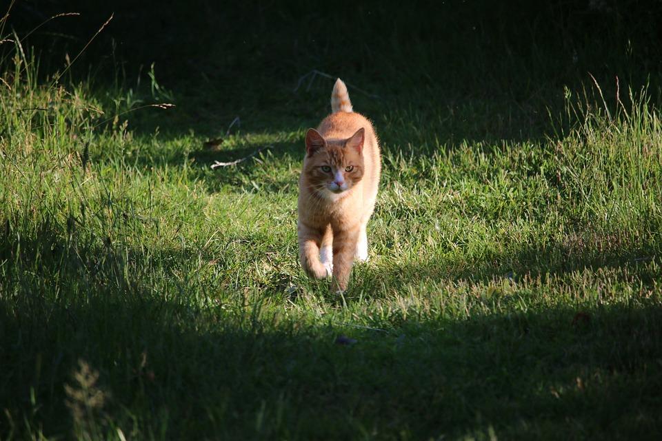 Cat, Garden, Pet