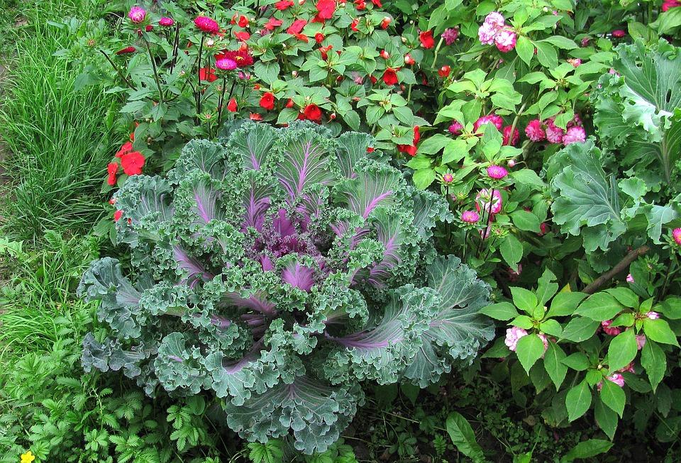 Garden, Cauliflower, Summer, Green Grass, Closeup