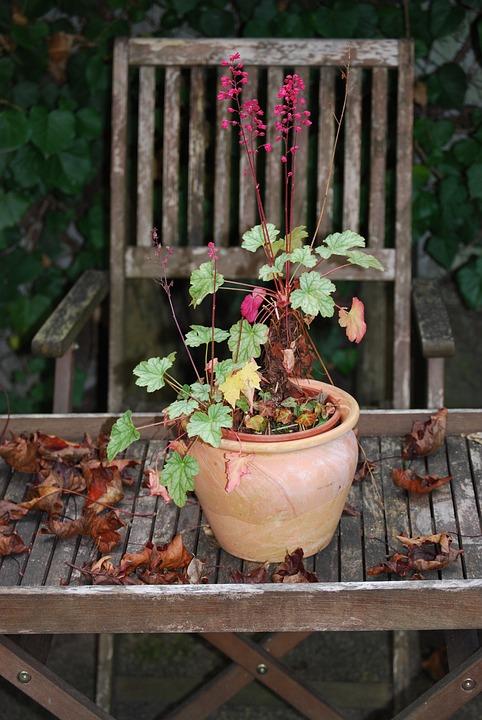 Coral Bells, Autumn Mood, Still Life, Garden Chair