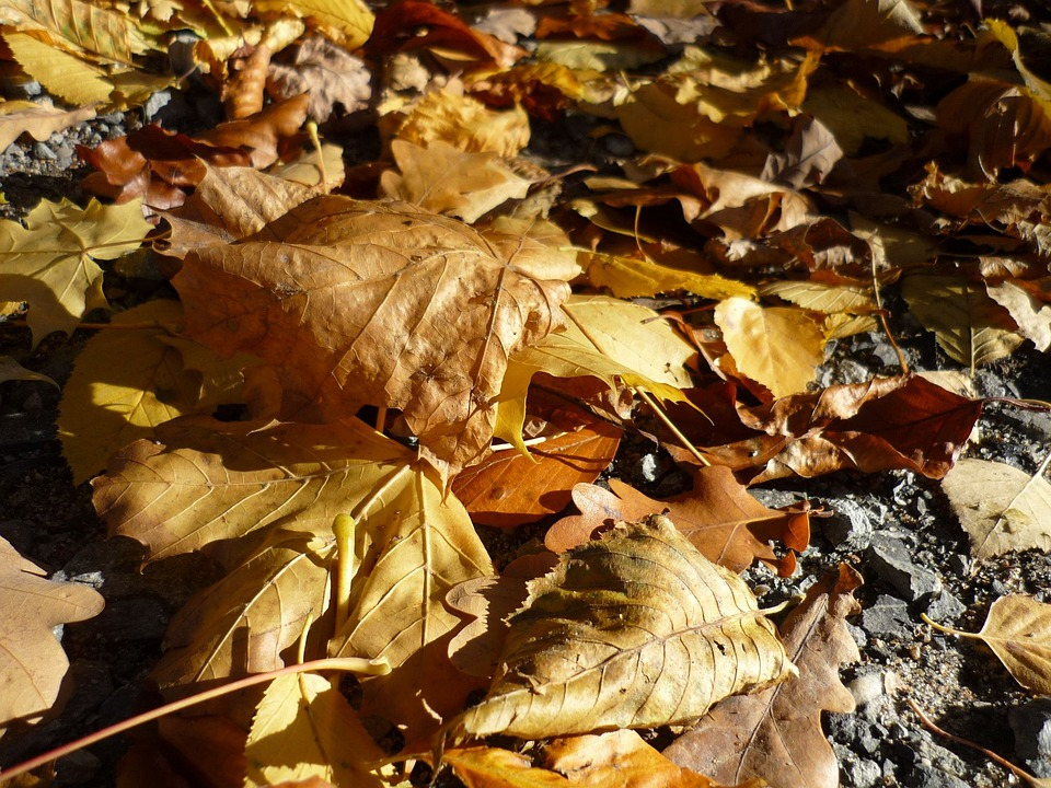 Time Of Year, Children, Leaves, Nature, Garden, Tree