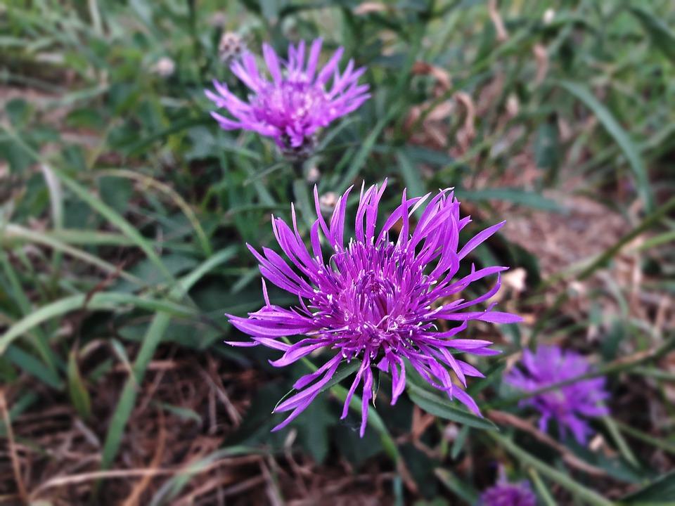 Flower, Heather, Color, Lila, Flowers, Violet, Garden
