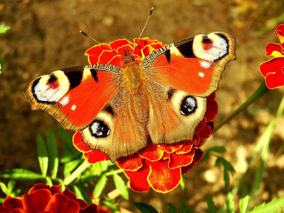 Nature, Butterfly Day, Insect, Flower, Color, Garden