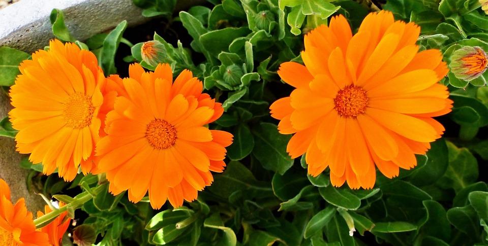 Flower, Plant, Nature, Summer, Garden, Color, Floral