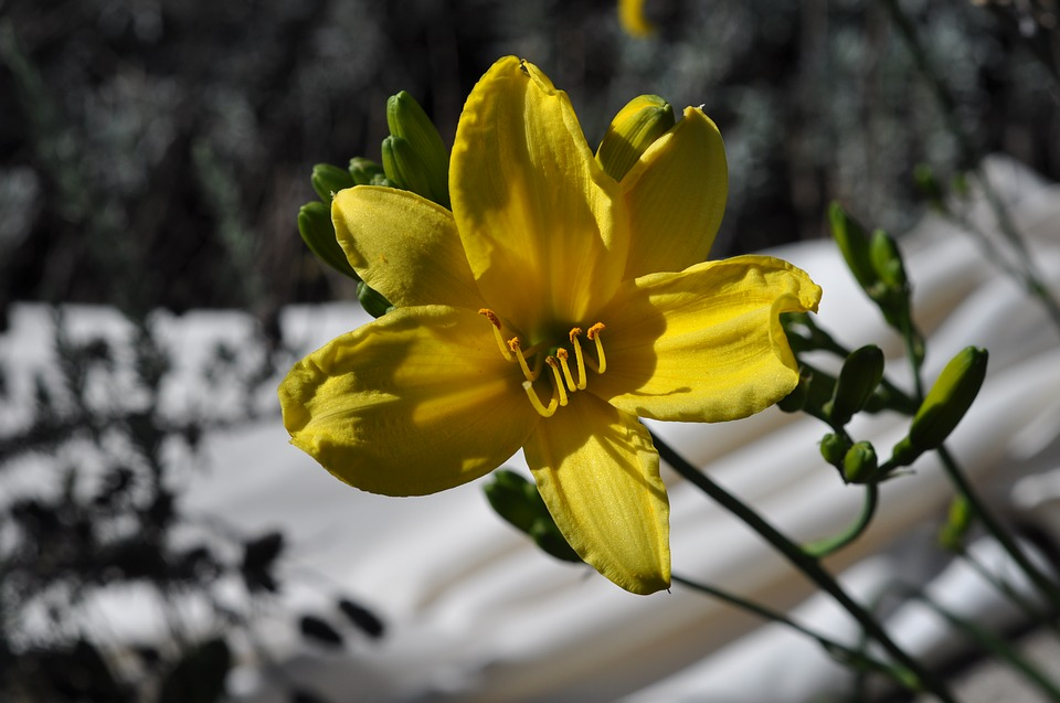 Lily, Yellow, Nature, Flowers, Flower, Colorful, Garden