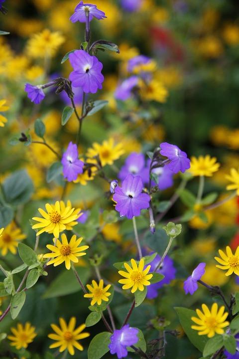 Daisy, Flower, Daisies, Garden
