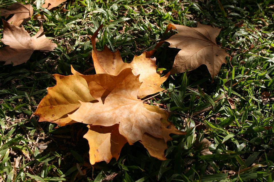 Leaves, Dried, Garden