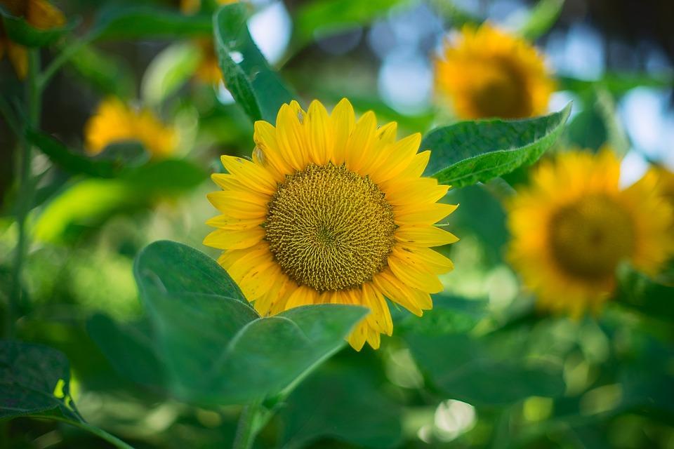Bright, Close-up, Color, Field, Flora, Flowers, Garden