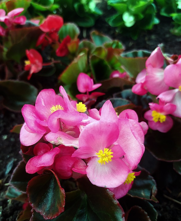 Flowers, Pink, Spring, Nature, Flora, Romantic, Garden