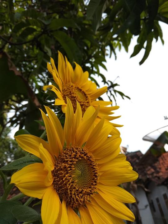Flora, Nature, Flower, Summer, Garden