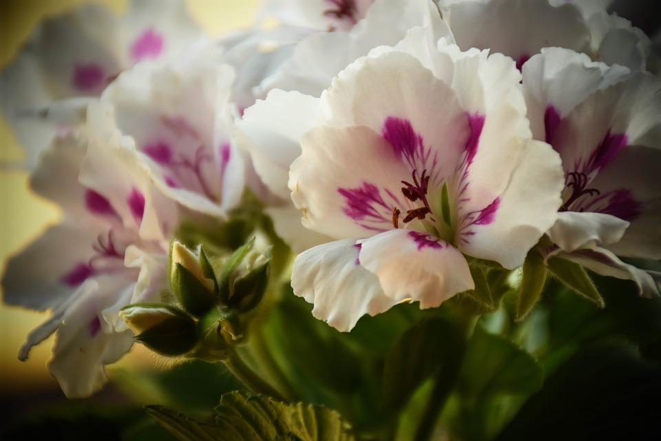Flower, Plant, Nature, Garden, Floral, Bloom, Lovely