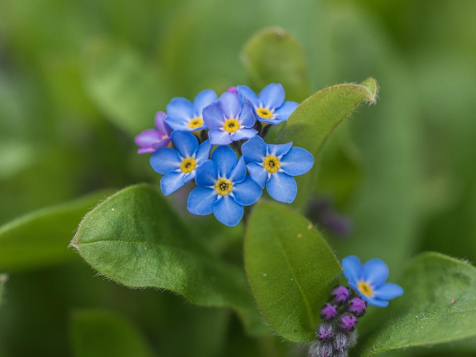 Flower, Garden, Close
