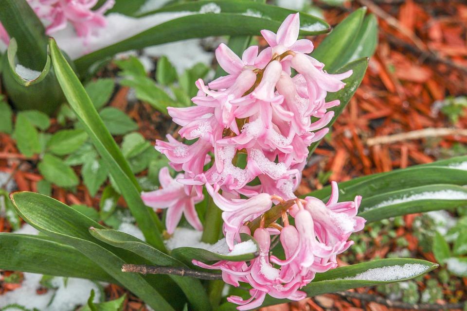 Nature, Flower, Leaf, Flora, Garden