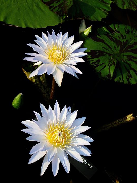 Nature, Flower, Flora, Summer, Leaf, Petal, Garden