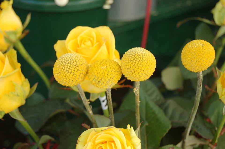 Nature, Plant, Flower, Leaf, Garden, Yellow Flowers