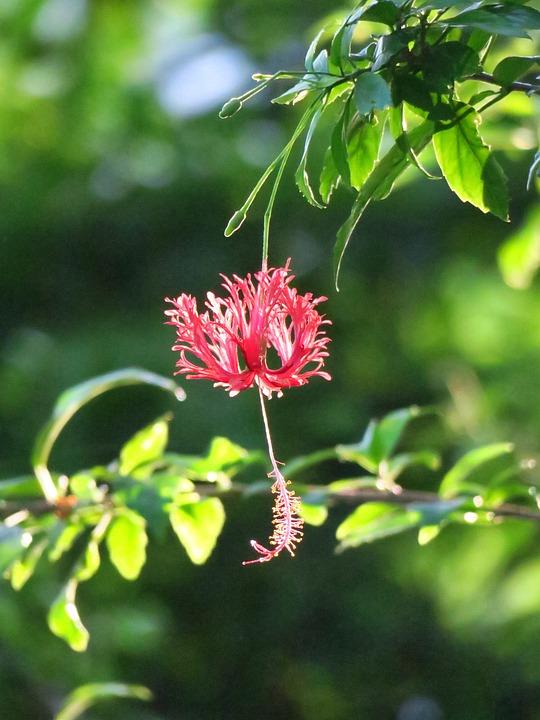 Flower, Nature, Plant, Flowers, Garden, Light