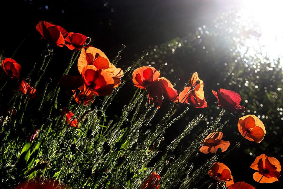 Flower, No Person, Outdoor, Garden, Nature, Plant