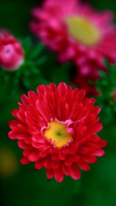 Flower, Garden, Nature, Spring, Bloom, Pink, Yellow