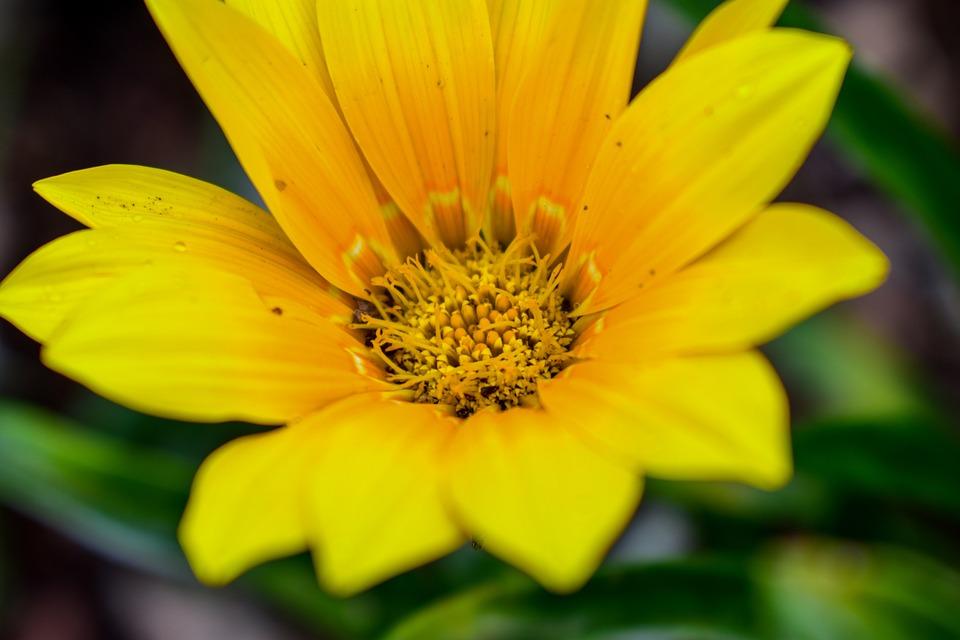 Nature, Flower, Plant, Garden