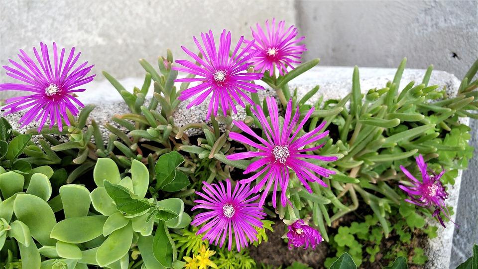 Flower, Nature, Plant, Summer, Garden, Botany