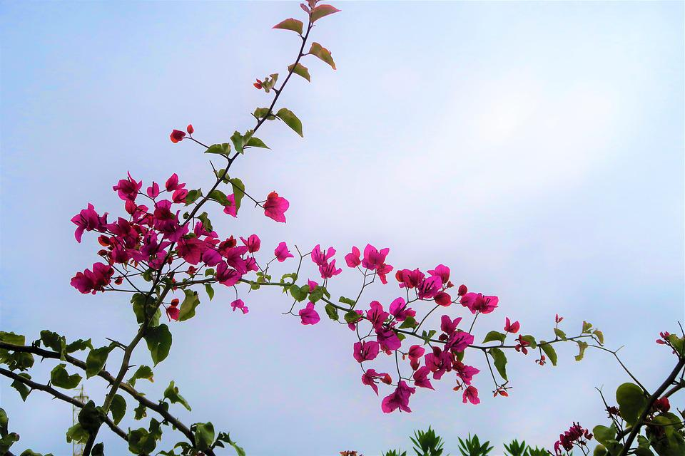 Flower, Pink, Flowers, Nature, Blooming, Plant, Garden