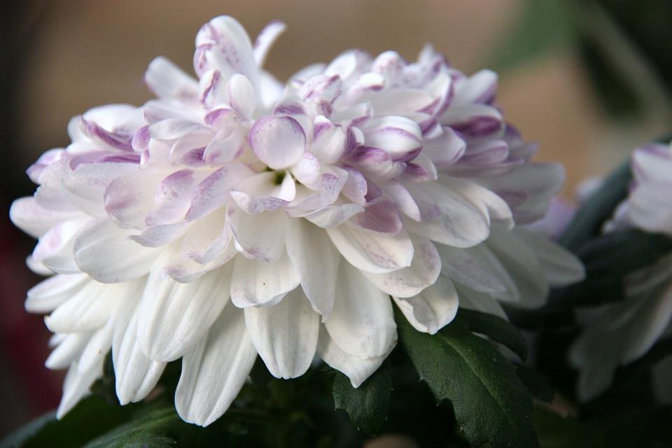 Flower, Nature, Garden, Plant, Spring