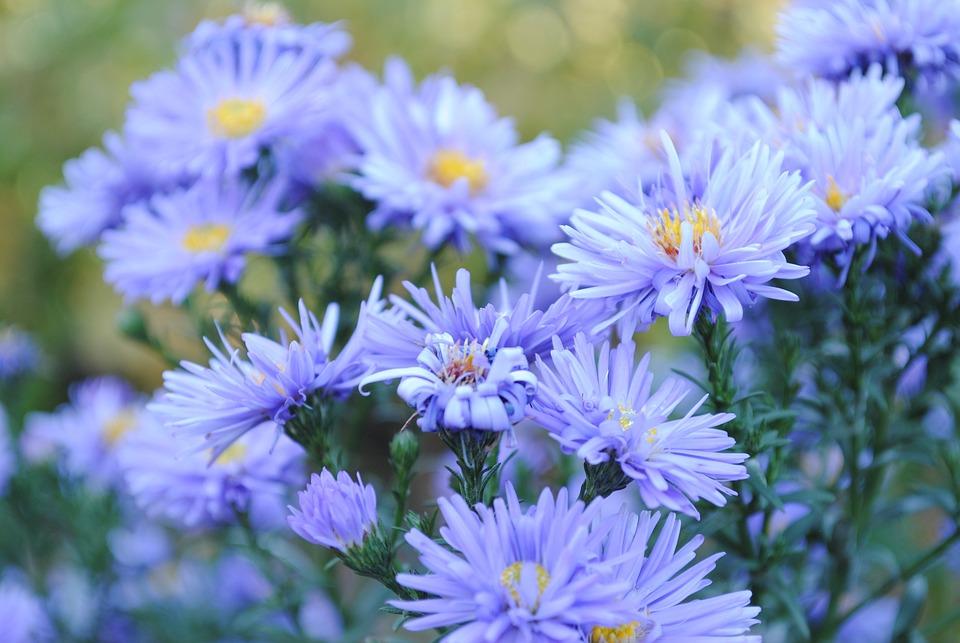 Flower, Nature, Plant, Garden, Summer