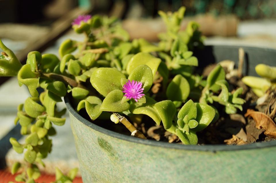 Plant, Flowerpot, Crock, Green, Garden, Flower, Floral