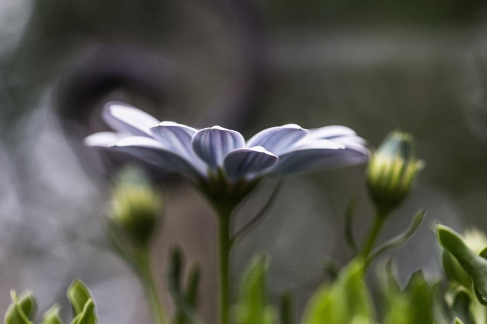 Garden, Flowers, Nature