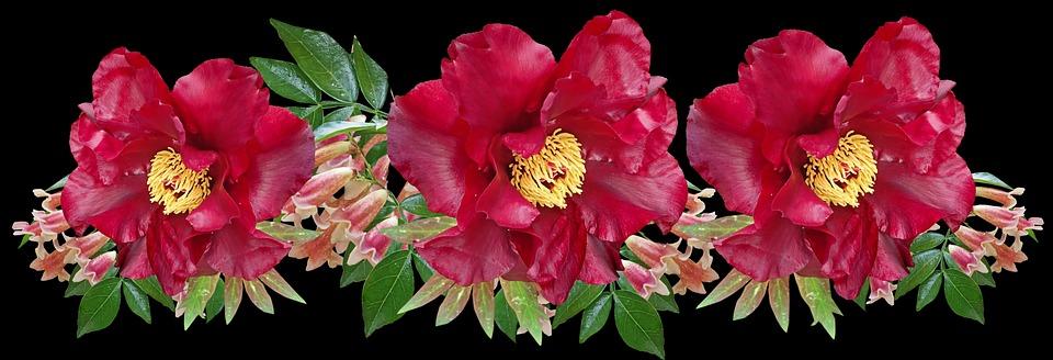 Flowers, Red, Peony, Pandorea Vine, Arrangement, Garden