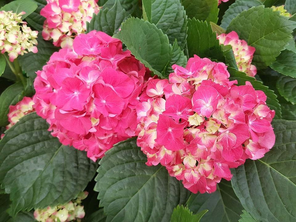 Nature, Flowers, Plants, Leaf, Garden