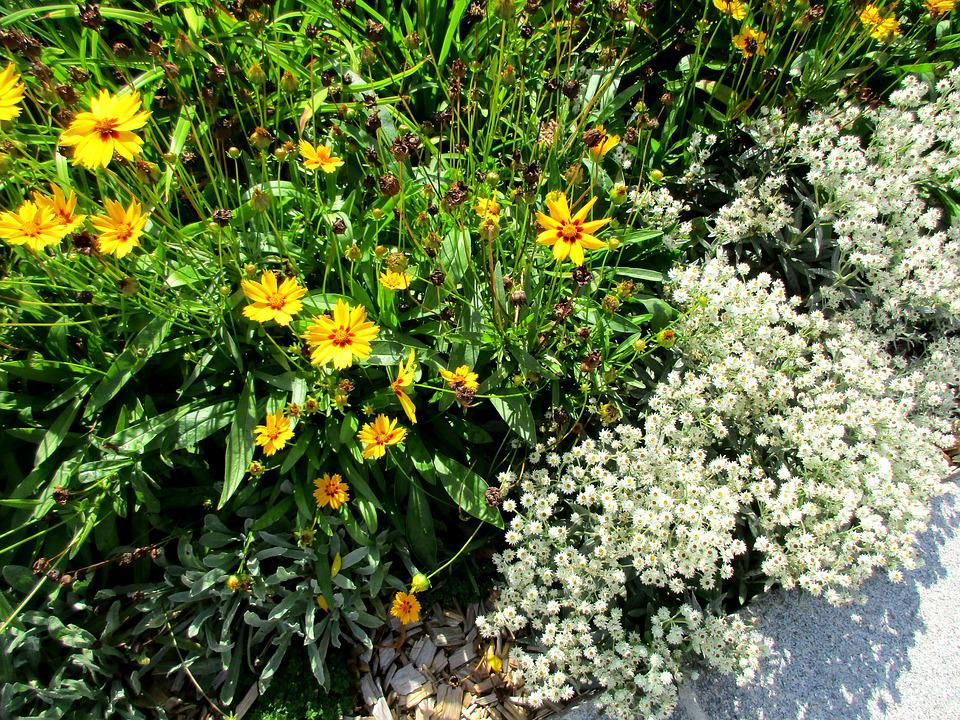 Yellow Flowers White Garden Ground Cover Bed