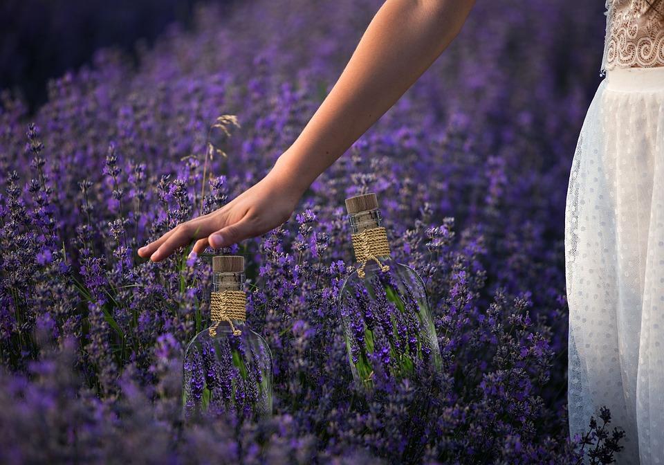 Spring, Lavender, Flowers, Garden, Fragrance
