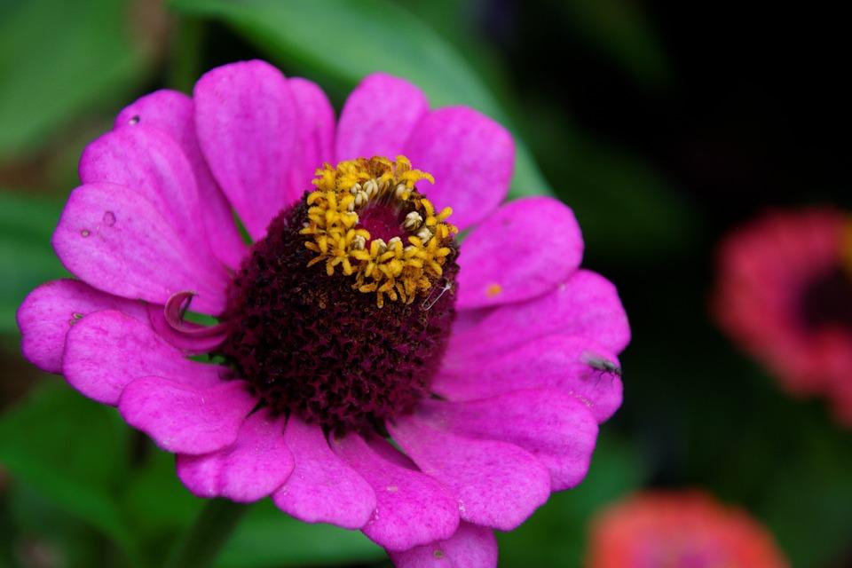 Flowers, Summer, Fragrance, Garden