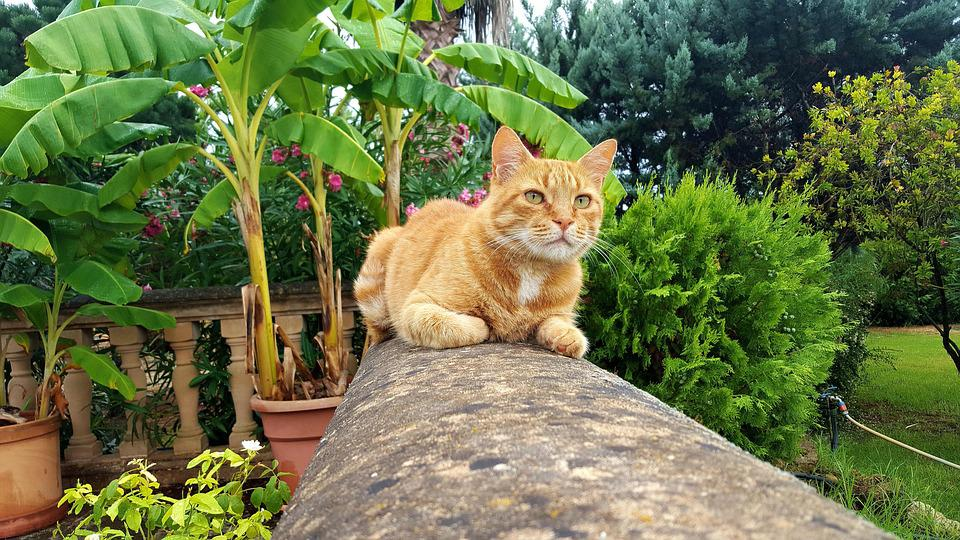Cat, Fauna, Freedom, Garden