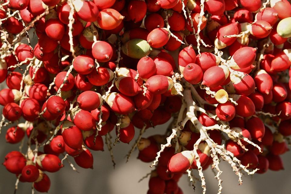 Berries, Fruit, Natural, Nature, Tree, Garden, Outdoor