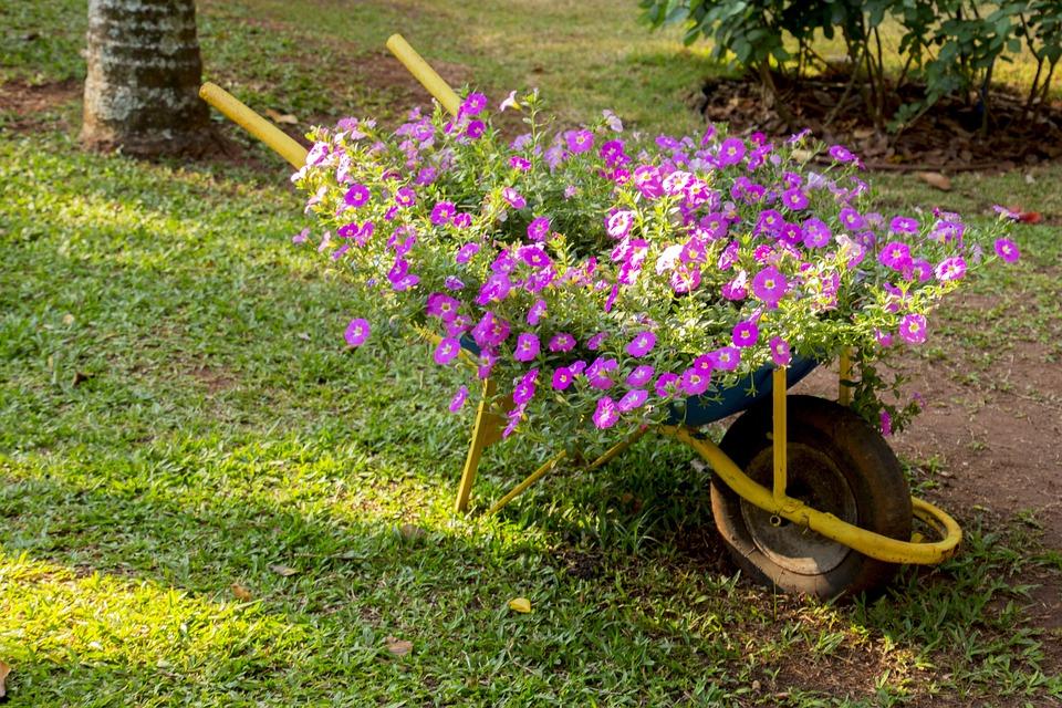 Superb Garden, Flower, Lawn, Nature, Plant, Summer, Gardening